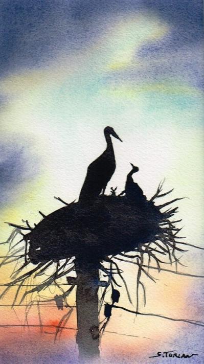 Cigognes nid
