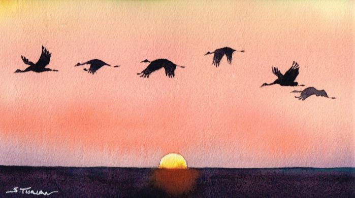 Vols d oiseaux